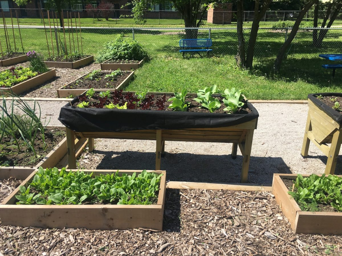 Community Gardens Declared an Essential Service