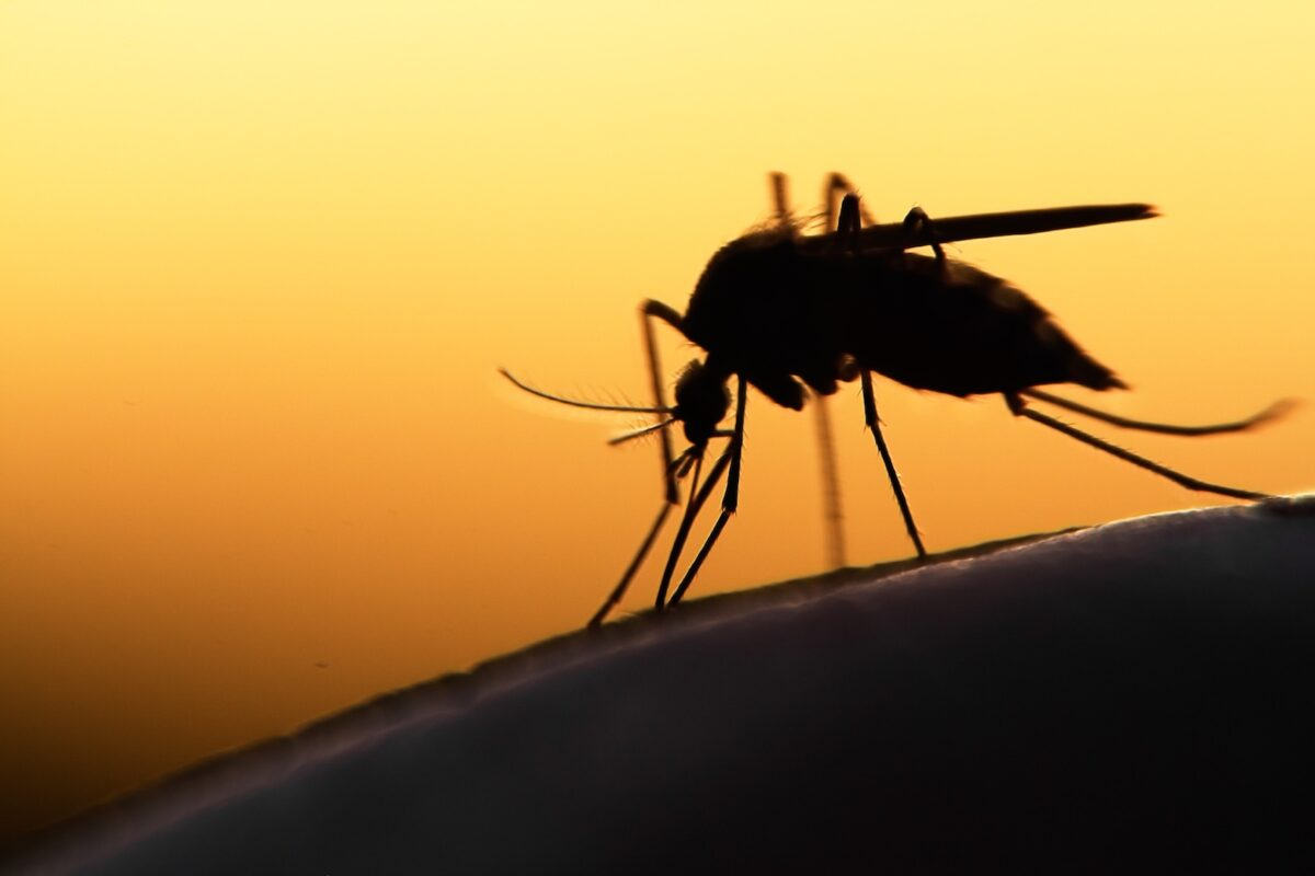 First case of person with West Nile found in Hamilton