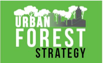 Hamilton Urban Forest Strategy seeking public engagement