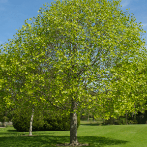 Take steps to protect your trees this summer
