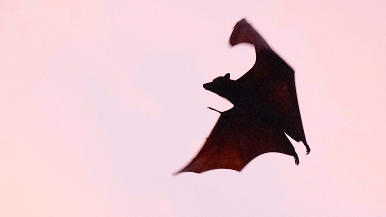 City confirms first case of bat rabies in 2021